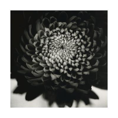 https://imgc.artprintimages.com/img/print/untitled-flower_u-l-q1br5em0.jpg?p=0
