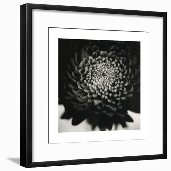 Untitled (Flower)-David Johndrow-Framed Photographic Print