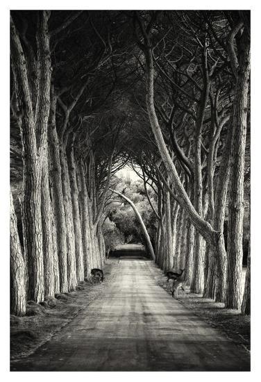 Untitled--Giclee Print