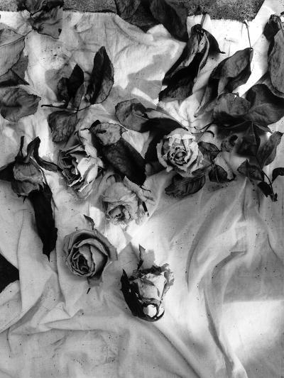 Untitled-Didier Gaillard-Photographic Print