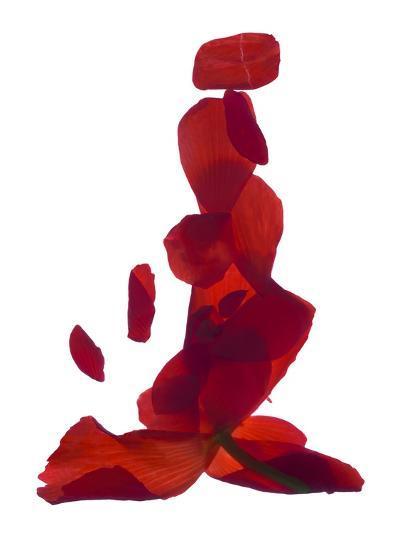 Untitled-Julia McLemore-Photographic Print