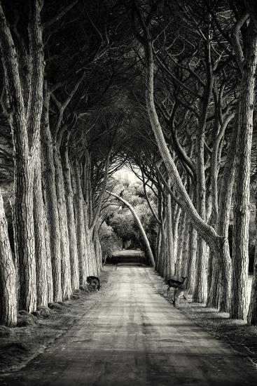 Untitled-Sandra-Photographic Print