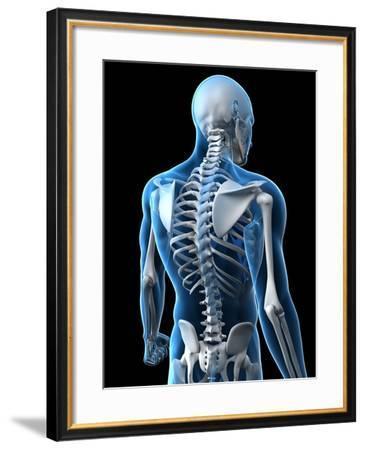 Upper Body Bones, Artwork-SCIEPRO-Framed Photographic Print