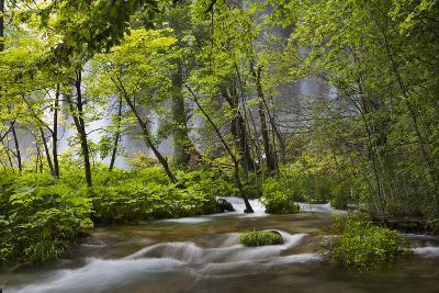 Upper Lakes, Waterfall Galovacki Slap, Plitvice Lakes, Plitvicka Jezera, Croatia-Martin Zwick-Photographic Print