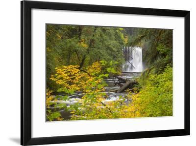Upper North Falls, Silver Falls State Park, Oregon, USA-Jamie & Judy Wild-Framed Photographic Print