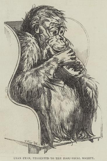 Uran-Utan, Presented to the Zoological Society-Harrison William Weir-Giclee Print