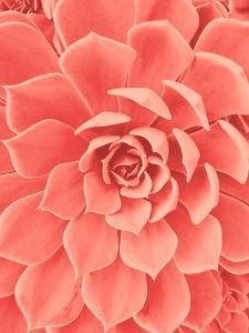 Coral Succulent by Urban Epiphany