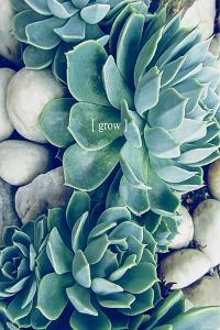 Grow Calm 2 by Urban Epiphany