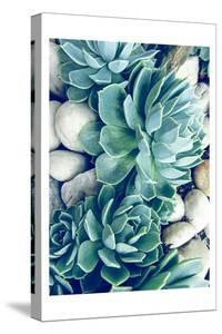Succulents no words by Urban Epiphany