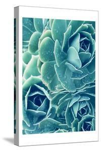 Succulents With Dew 2 by Urban Epiphany