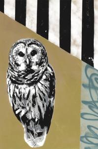 Barred Owl - Recolor by Urban Soule