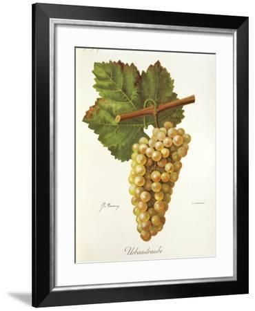 Urbanitraube Grape-J. Troncy-Framed Giclee Print
