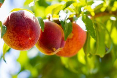 Peaches by urbanlight