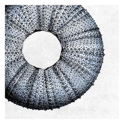 https://imgc.artprintimages.com/img/print/urchin-shell-1_u-l-f8s6n80.jpg?p=0