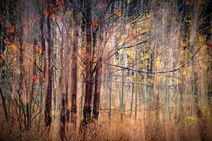 Autumn Riot by Ursula Abresch