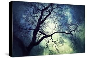 Branches at Night by Ursula Abresch