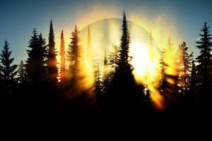 Burning Forest by Ursula Abresch