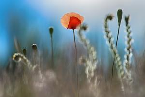 By the Side of the Road 1 by Ursula Abresch