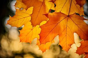 Canadian Autumn by Ursula Abresch