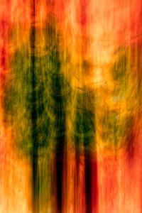 Cedars At Night by Ursula Abresch