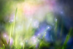 Colourful Dew by Ursula Abresch
