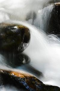Creek Watcher by Ursula Abresch