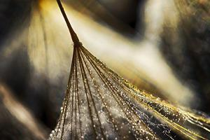Dancing in the Golden Hour by Ursula Abresch
