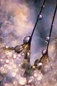Dancing Seedlings by Ursula Abresch