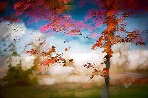 Deconstructed Fall 1 by Ursula Abresch