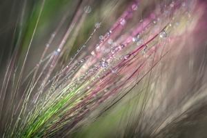 Dew 3 by Ursula Abresch
