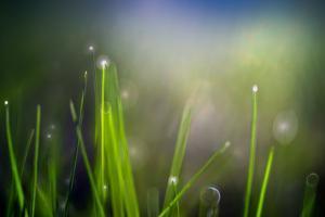 Dew by Ursula Abresch