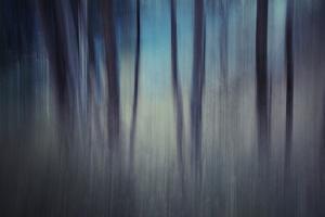 Evening Woods by Ursula Abresch