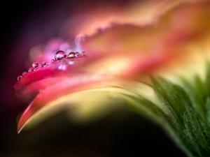 Extreme Dew by Ursula Abresch