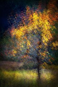 Fall Drama by Ursula Abresch