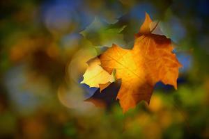 Fall Fantasy 1 by Ursula Abresch