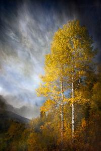 Fall Fantasy 2 by Ursula Abresch
