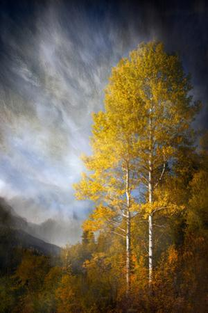 Fall Fantasy 2 by Ursula Abresch