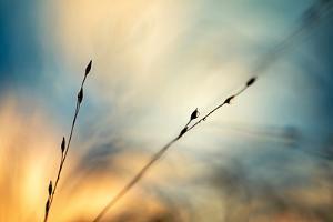 Fall Grasses by Ursula Abresch