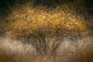 Fall Impression by Ursula Abresch