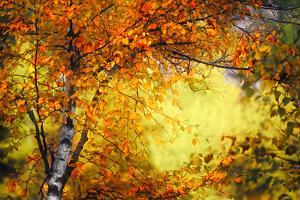 Fall Light 3 by Ursula Abresch