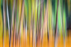 Fall Trees by Ursula Abresch