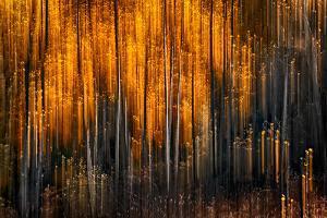 Falling Stars by Ursula Abresch