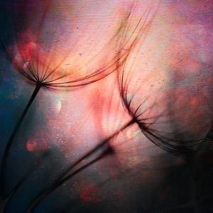 Feathery by Ursula Abresch