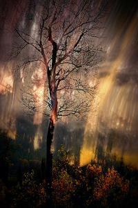 Fiery Night by Ursula Abresch