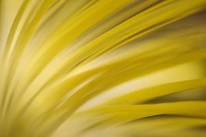 Filaments by Ursula Abresch