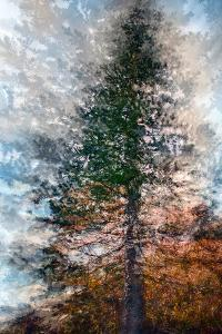 Fir by Ursula Abresch
