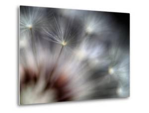 Fireworks by Ursula Abresch