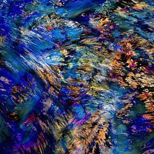 Flamboyant by Ursula Abresch