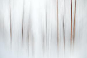 Fog by Ursula Abresch