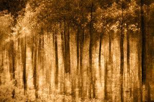 Ghost Forest-Autumn by Ursula Abresch